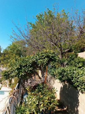 A few fruit Tree